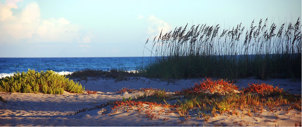 Annual Sea Oat Planting, Saturday, February 4, 9 AM @1st Street South